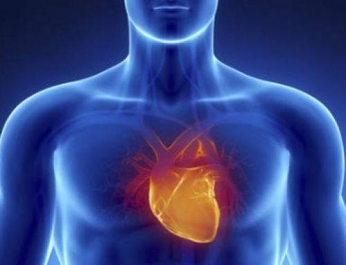 Une carte 3D du cœur pour mieux connaître les maladies cardiaques